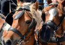 Священник из Германии привезет на лошадях в Россию «колокол мира»