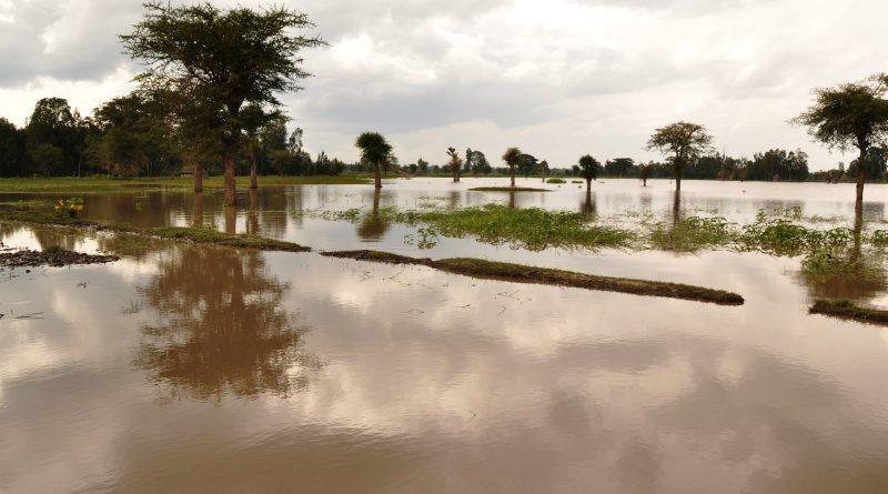 Ураган в Африке забрал жизни 500 человек. Христиан призвали молиться о пострадавших