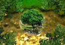 Ватикан проведет «Год экологии» для продвижения «экологического сознания»
